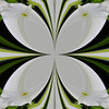 KaleidoscopeQN