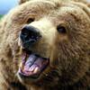 BearWithAKnife