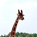 Giraffe Skyline by jbowler