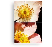Spring - Roses - Wild Canvas Print