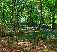 The Beech Wood by VoluntaryRanger