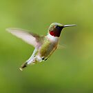 Hummingbird 1 by Molly  Kinsey