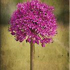Allium Digital Painting by Sarahbob