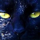 Cats Eyes by DionNelson