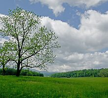 A Pastoral Nature Shot on a Great Day by Robert H Carney