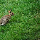Here Comes Peter Cottontail by Sunshinesmile83