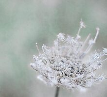 Winter's Sweet Fury Brings the Promise of Spring by greenzinnia