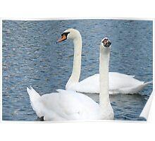 Swan duet Poster