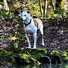 Woodland Dog by KChisnall