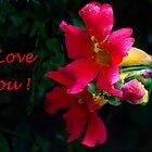 I Love You! by heatherfriedman