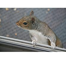 Really, I am not at all interested - - unless you have a peanut! Photographic Print