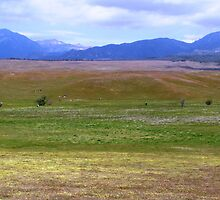 Peaceful Pastureland by chell265