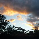 Bronte Sky at Night, Sydney by Angela Gannicott