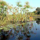 Reflecting in the Okavango by Graeme  Hyde