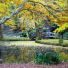 Autumn leaves, Nicholas Gardens, Victoria , Australia. by johnrf