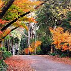 Autumn Walk, Mt Wilson. by Malcolm Clark