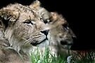 LIONESSES by Debbie Ashe