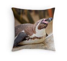 Humboldt penguin at Weymouth Sea Life Centre Throw Pillow