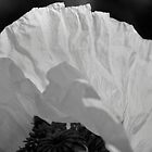 Black and white Poppy by Nigel Jones