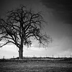 The Tree Of Life B&amp;W by John  De Bord Photography