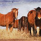 Wild Horses of Shackleford Banks 2 by Joye Ardyn  Durham
