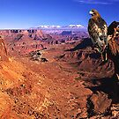 """Grand Canyon Redtail"" by MochaMan"