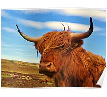Standing Guard - Highland Cow Poster
