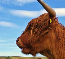 Hold Fast - Highland Cow by caledoniadreamn