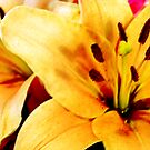 Yellow Lilies by bruxeldesign