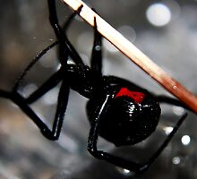 The Black Widow by Valerie Henry
