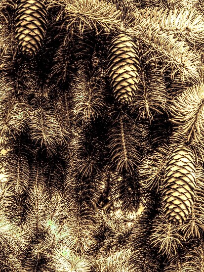 Pine Tree and Cones - Different aspect by Glenn Cecero