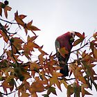 Galah in the tree. by CarrieCollins