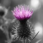 Thistle. by CarrieCollins