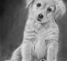 Golden Retriever Puppy drawing by John Harding