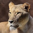 Regal Thoughts by Lance Leopold