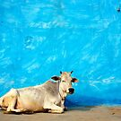 Holy Cow - India by David Reid