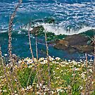 Daisy Coast  by heatherfriedman