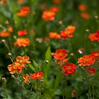orange flora (2) by codaimages
