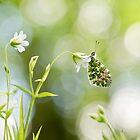 Spring Arrivals by Sarah-fiona Helme