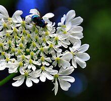 Blue Fly by Sam Halford