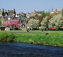 Blossom at Tweed Green Peebles by photobymdavey