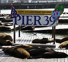 21 Years of Sea Lions by fototaker