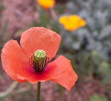 Orange Poppy by Bernie Garland