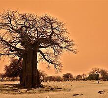 Baobab by Daniel Mulcahy