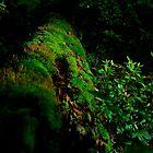 Living Log by Lanny Edey