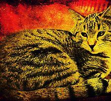 Cat-itude by pat gamwell