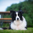 2011 jessie the wonder dog by Melinda Kerr
