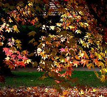 Dangling Autumn Leaves. by waxyfrog