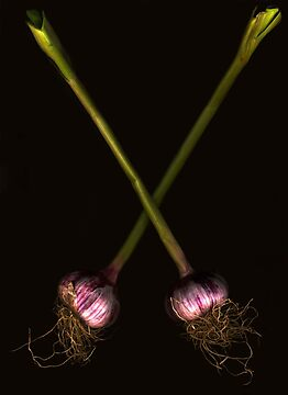 Fresh Garlic by Barbara Wyeth