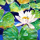 Waterlilies in Helga's pond by Gregory Pastoll